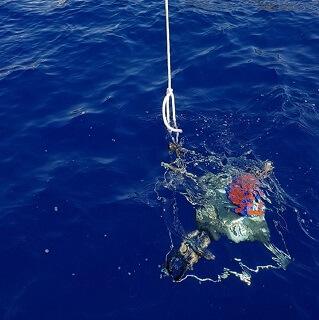 Raia assiste a afundamento de correntómetro nos mares da Madeira
